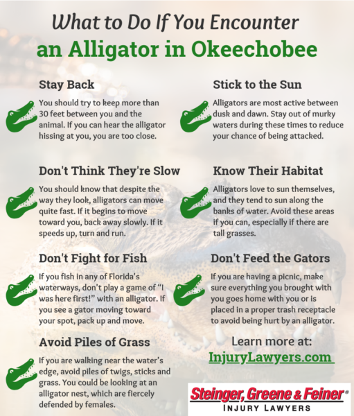 What to Do If You Encounter an Alligator in Okeechobee